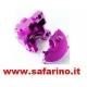 SCATOLA DIFFERENZIALE ERGAL FUXIA    art. HI102075